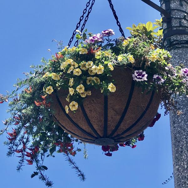 New Hanging Flower Baskets Beautify Carlsbad Village