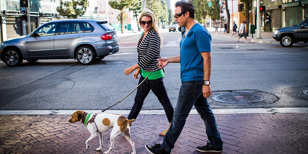Residents walking their dog