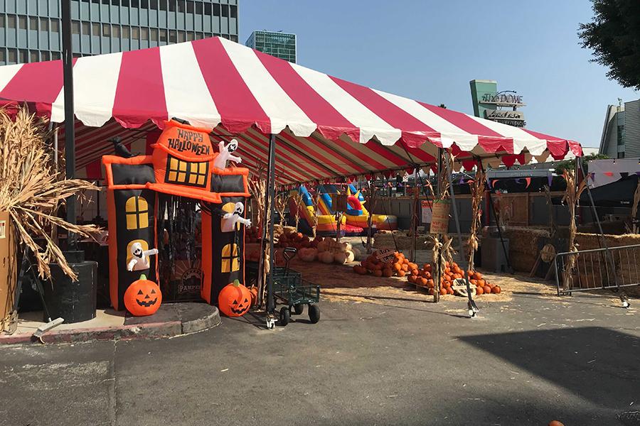 Mr. Jack-O-Lantern Pumpkin Patch