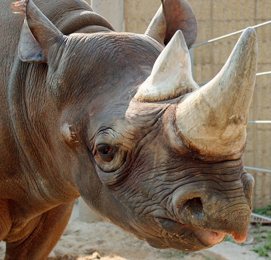Rhino Week
