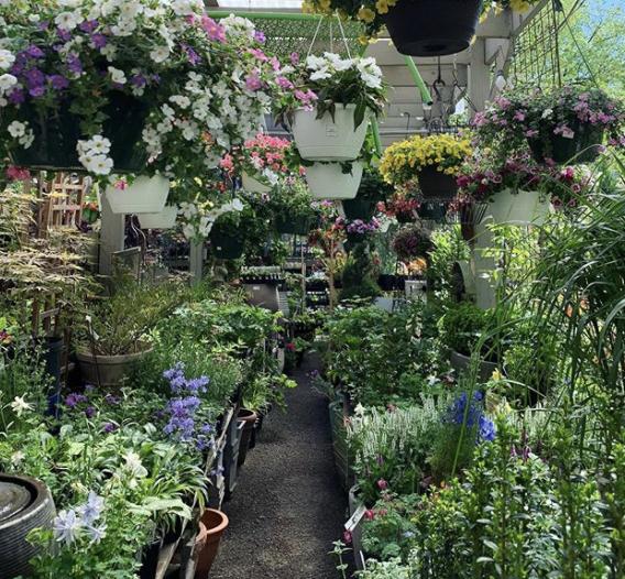 Ginkgo Gardens