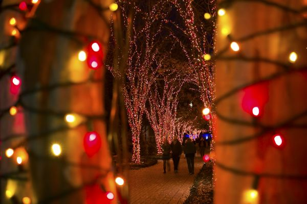 Garden Lights Holiday Nights at the Atlanta Botanical Garden