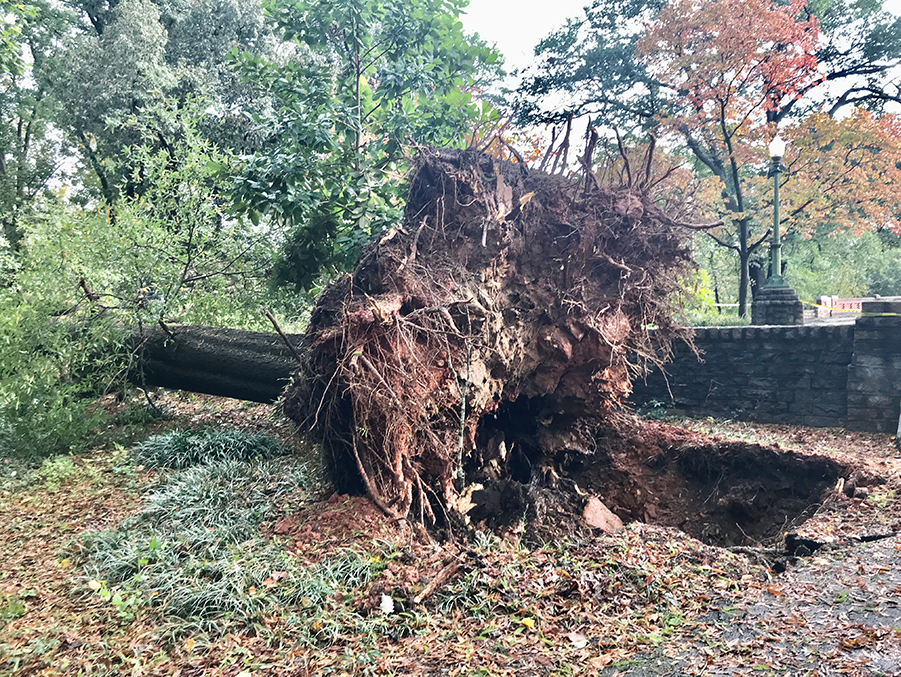 When Tropical Storm Zeta came through Atlanta last October, it brought down a more than 100-year-old oak at Piedmont Park. The conservancy is grateful for the help of volunteers to help clean up after storms these large.