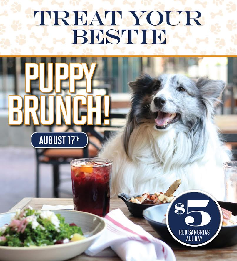 Puppy Brunch At Bulla Gastrobar Atlanta
