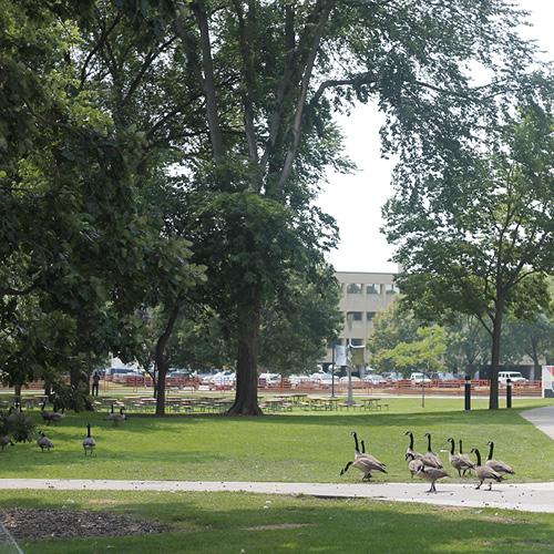Mayo Park