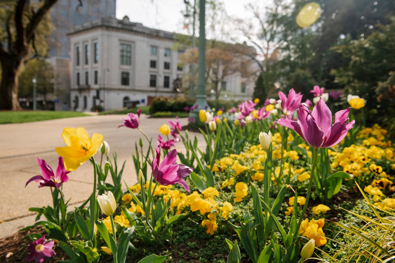 tulips and other flowers in front of State Capitol