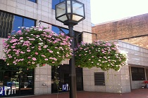 Hanging flower pots brighten up Downtown