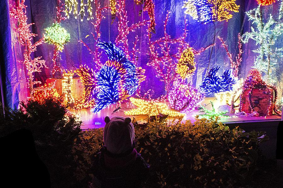 Magic season events downtown bellevue wa for Bellevue botanical garden lights