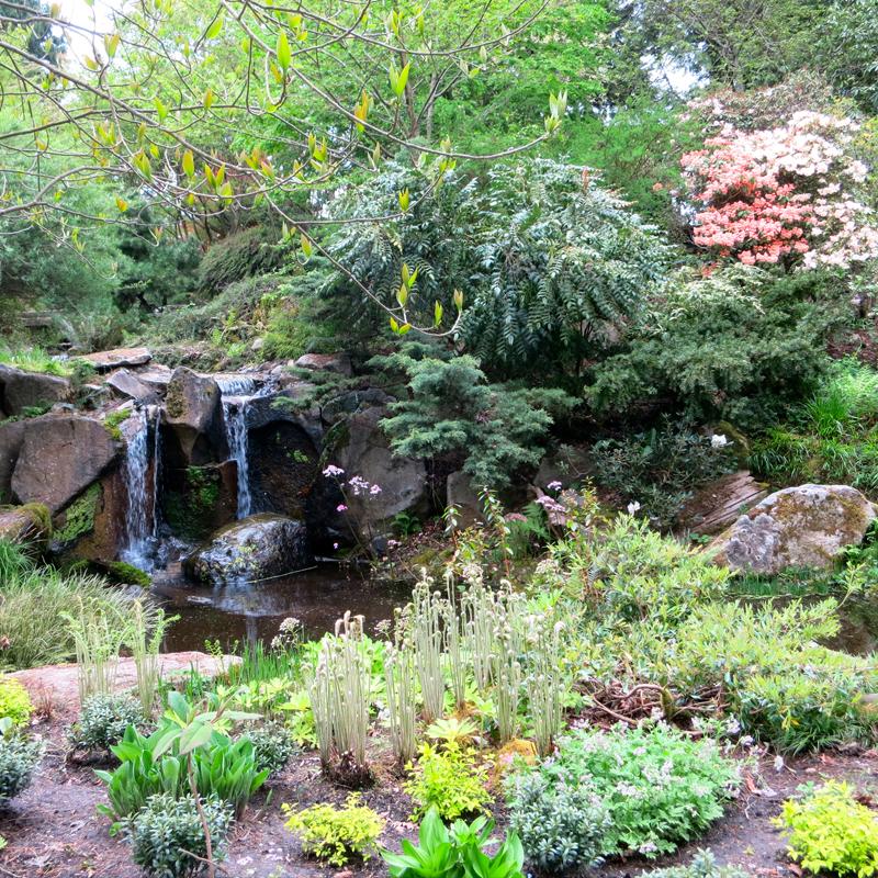 Bellevue Botanical Garden - member 3